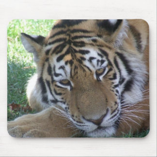 Tiger-sleeping-in-the-grass WILD ANIMALS BIG CATS Mouse Pad