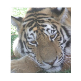 Tiger-sleeping-in-the-grass WILD ANIMALS BIG CATS Notepad