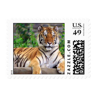 Tiger Small Stamp