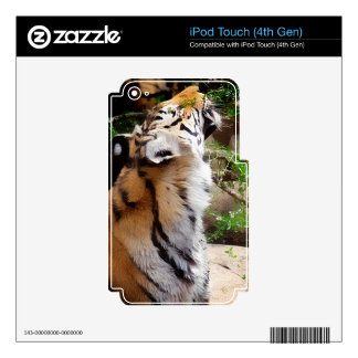 Tiger Smelling Flowers iPod Touch 4G Decal