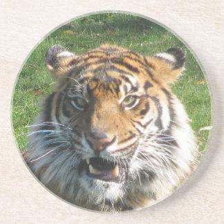Tiger Smile Beverage Coaster