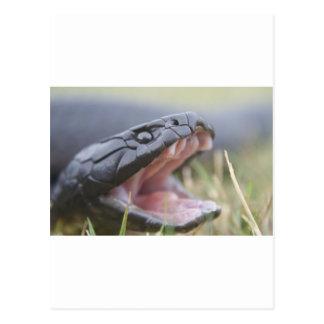 Tiger Snake Postcard