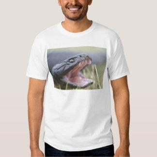 Tiger Snake Tshirts
