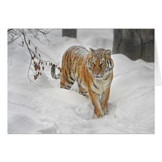 Tiger Snow Path Card