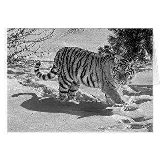 Tiger Snow Shadow Black White Card