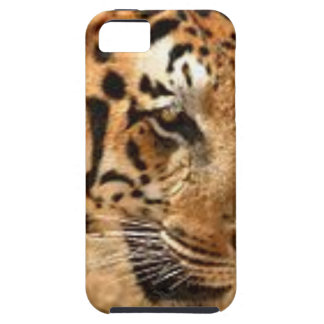 Tiger Stalking in India iPhone SE/5/5s Case