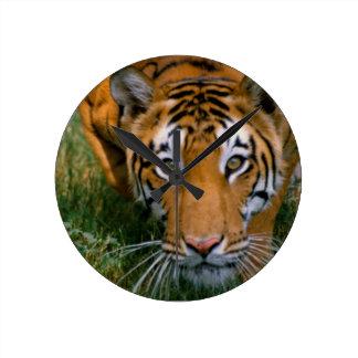 Tiger Stalking Round Clock