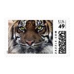 Tiger Stamps