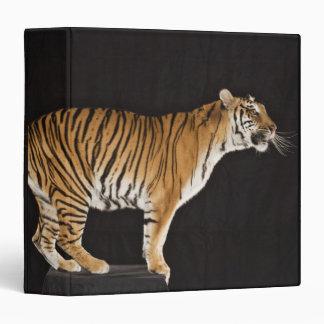 Tiger standing on platform 3 ring binder