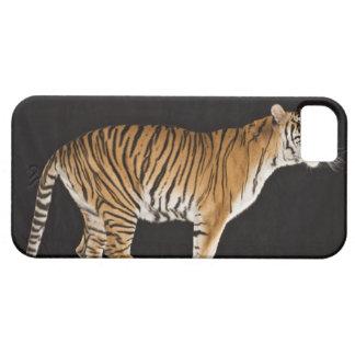 Tiger standing on platform iPhone SE/5/5s case