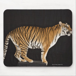 Tiger standing on platform mouse pad