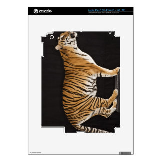 Tiger standing on platform decal for iPad 3