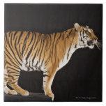 Tiger standing on platform tiles