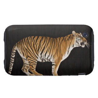 Tiger standing on platform tough iPhone 3 cover