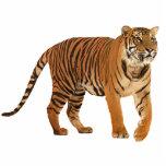 tiger standing photo sculpture