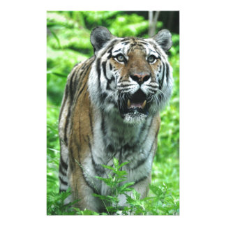 Tiger Stationery Paper