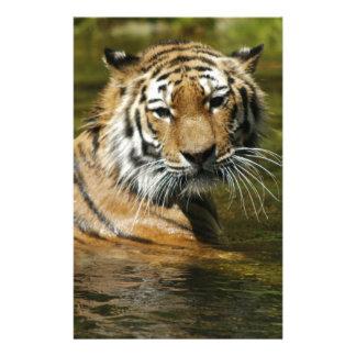 Tiger Stationery Design