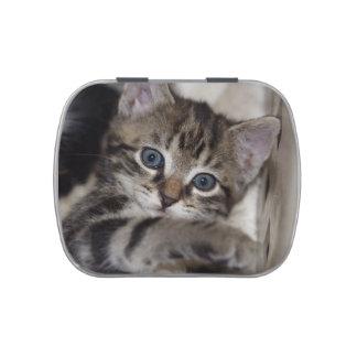 Tiger Stripe Tabby Kitten Candy Tins