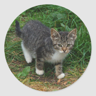 Tiger Striped Kitten Stickers