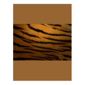 Tiger Stripes Postcard