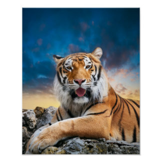 Tiger Sunset Poster