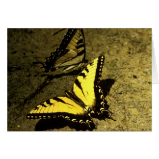 Tiger Swallowtail Butterflies Greeting Card