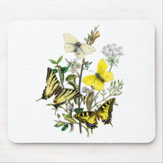 Tiger Swallowtail Butterflies Mouse Pad