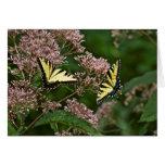 Tiger Swallowtail Butterflies on Joe Pye Weed Cards