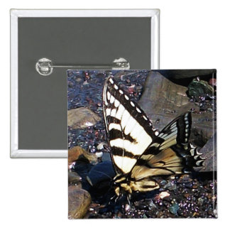 Tiger Swallowtail Butterfly 1 Buttons
