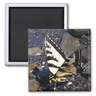 Tiger Swallowtail Butterfly 1 Magnet