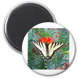 Tiger Swallowtail Butterfly 2 Inch Round Magnet