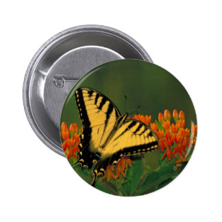 Tiger Swallowtail Butterfly Buttons