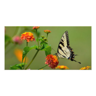 Tiger Swallowtail Butterfly Card