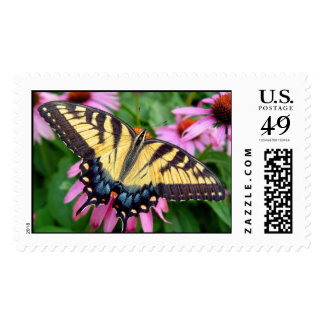 Tiger Swallowtail Butterfly Close-Up on Flower Stamps