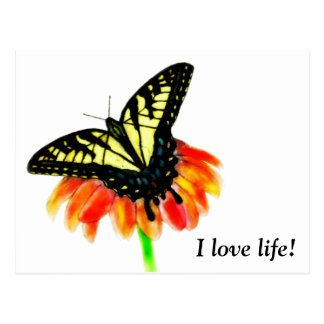 Tiger Swallowtail Butterfly - I love life! Postcard