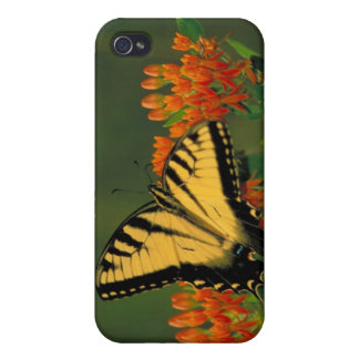 Tiger Swallowtail Butterfly Cases For iPhone 4