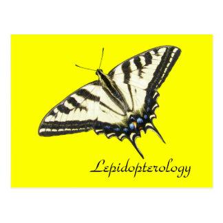 Tiger swallowtail butterfly Lepidopterology Postcard