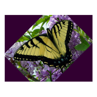 Tiger swallowtail butterfly lilac photo postcard