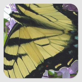 Tiger swallowtail butterfly lilac photo square sticker