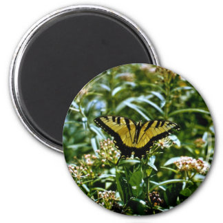 Tiger Swallowtail Butterfly Magnet