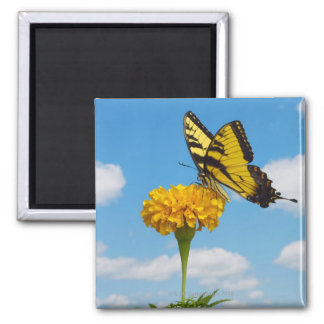 Tiger Swallowtail Butterfly on a Flower Fridge Magnets