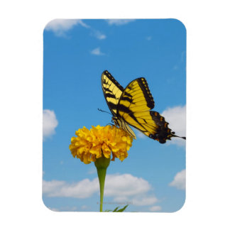 Tiger Swallowtail Butterfly on a Flower Magnet