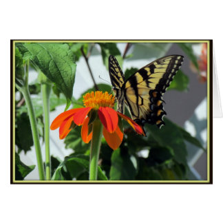 Tiger Swallowtail Butterfly on Mexican Sunflower Card