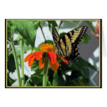 Tiger Swallowtail Butterfly on Mexican Sunflower Greeting Card