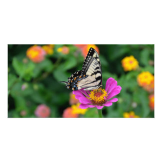 Tiger Swallowtail Butterfly on top of Aster Flower Card