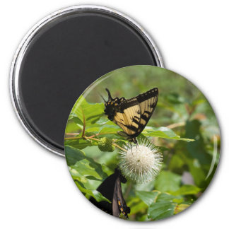 Tiger Swallowtail Butterfly on Wildflower Magnet