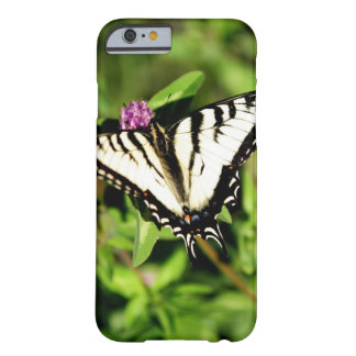 Tiger Swallowtail Butterfly. Papilio glacus. Barely There iPhone 6 Case
