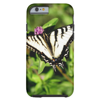 Tiger Swallowtail Butterfly. Papilio glacus. Tough iPhone 6 Case