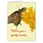 Tiger Swallowtail Butterfly (Papilio glaucas) Item Greeting Cards