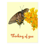 Tiger Swallowtail Butterfly (Papilio glaucas) Item Postcard